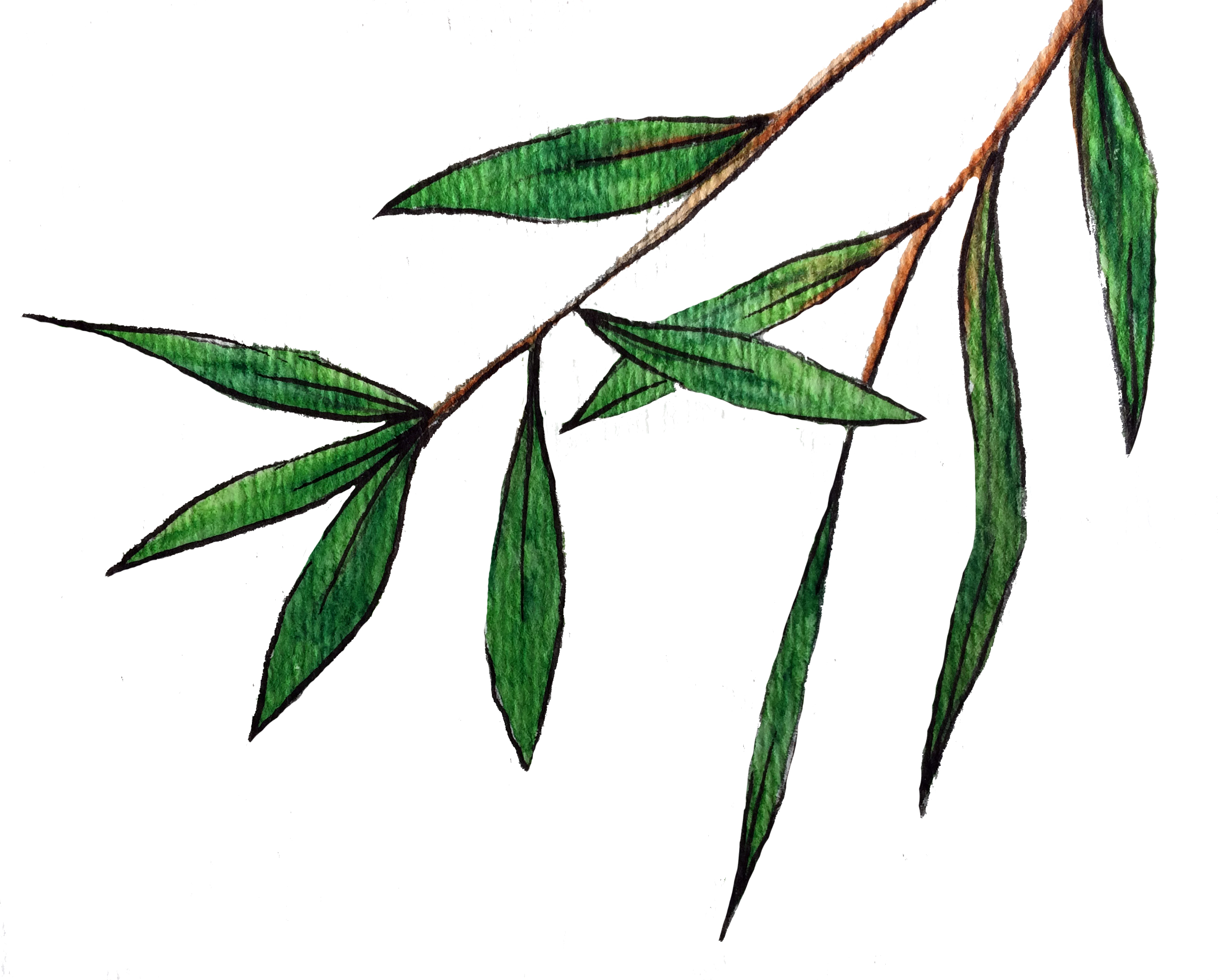 Bamboo Love | Short Story by Krista Suh | Bamboo Illustration by Aurora Lady